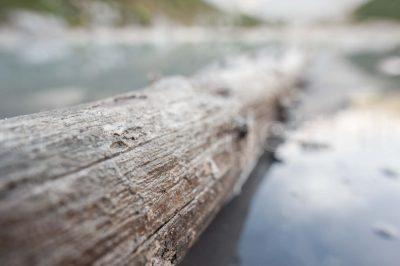 Alberi nel lago di Sorapis